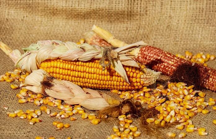934747d-corn-1725636-1280